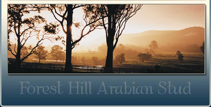 Forest Hill Arabian Stud